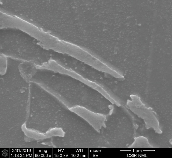 microstructure modification between the conventional DP590 and modified DP590 microstructure: